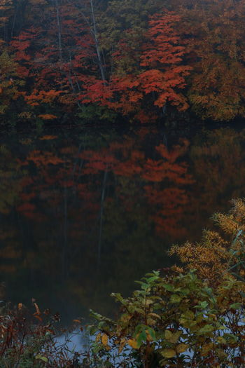 紅葉見頃の場所は交通規制🍁お出かけ時は調べてね~👍 Nature Vertical Leaf No People Outdoors Water Day Beauty In Nature Close-up Water Reflections Waterfrontおはよう😆