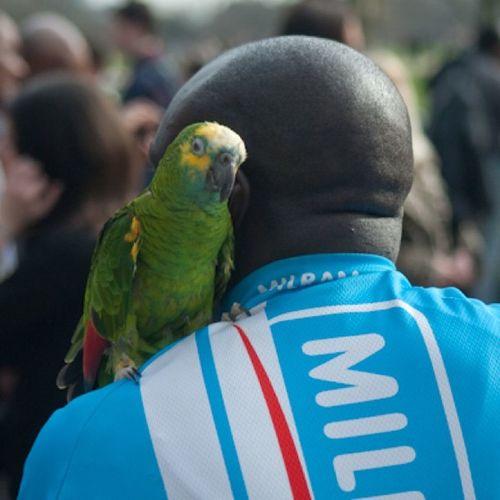 London Speakerscorner Hydepark Green parrot nikond200