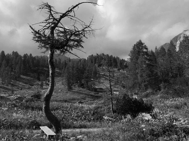 Old pine tree near Triglav Lakes Lodge, Julian Alps, Slovenia, 2017. Triglav Lakes Lodge Triglav Lakes Slovenia IfeelsLOVEnia Tranquility Tree Landscape Nature Beauty In Nature Scenics Outdoors Growth Old Old Tree
