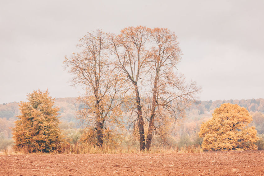 Golden autumn, country life, landscape Autumn Bare Tree Beauty In Nature Change Day Fall Field Land Landscape Nature No People Non-urban Scene Outdoors Plant Plant Part Scenics - Nature Sky Tranquil Scene Tranquility Tree