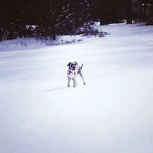 Muffin Terriermix Terrier Snowday Northcarolina CeBPhotography