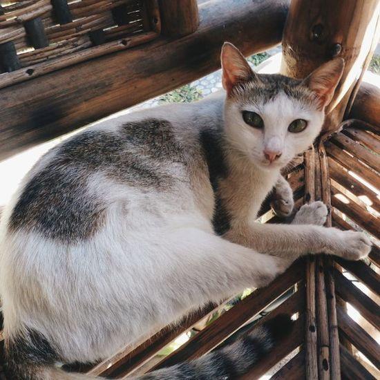 Cutie cat 😻 ⚫ ⚫ ⚫ ⚫ ⚫ VSCO Vscocam VSCOPH Vscodaily Cat Catlover Instagram Instagramers Instapic Instadaily Igers VscoCamPHF Vscocam Vscocamph Vscocamphilippines