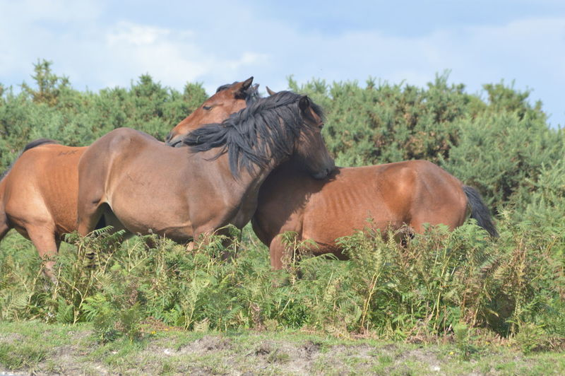 Animal Animal Themes Mammal Animals In The Wild Outdoors Animal Wildlife Domestic Animals No People Nature Livestock New Forest Nature Horses Wild Horses New Forest Pony No Filter, No Edit, Just Photography Friendship