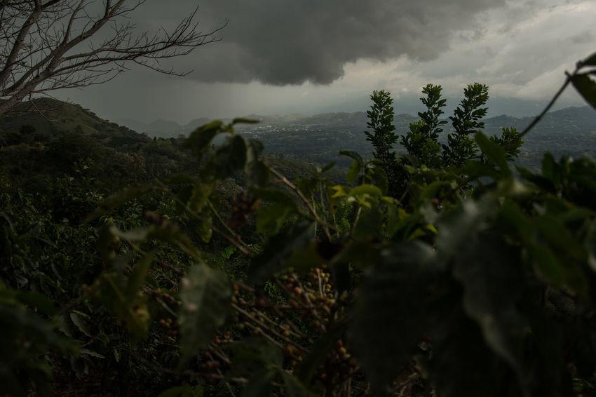 beautiful view close to atenas Cloud Costa Rica Costa Rica Y Su Naturaleza Costa Rica 🇨🇷 Costa Rica❤ EyeEm Nature Lover Cloud - Sky Coffe Plant Coffe Plantation EyeEm Mountain Lover Eyeem Nature