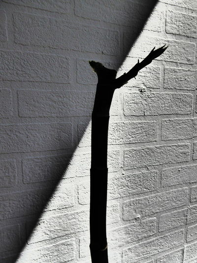 Anthurium - Flamingoblume Bamboo Bamboo - Plant Beaty In Nature Black & White Broken Symmetry Diagonal Lines Flower Collection Growing Plants Heading Up Light And Shadow No People Shadows & Lights Structuralphotography Structure And Nature Structures & Lines Urbanphotography