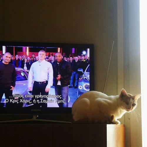 Cat Gear Supercarstvshow Tv Show Resqued Cats Ginger Cat Paw Whisker Cats Of EyeEm Cat EyeEm EyeEmNewHere EyeEm Gallery Alex EyeEm Selects EyeEm Nature Lover