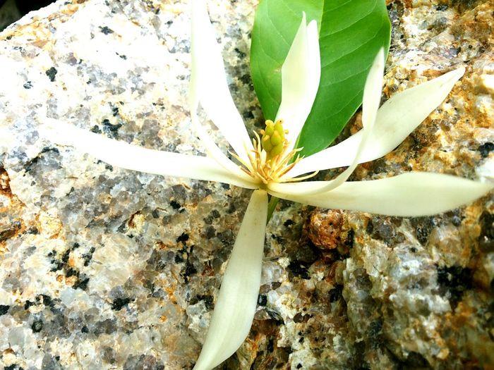 ดอกไม้กับก้อนหิน