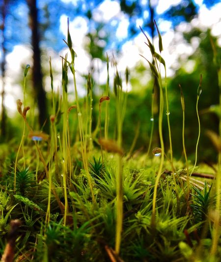 Forest Growth Nature Grass Beauty In Nature Plant Green Color Tranquility Field Day Fragility Close-up