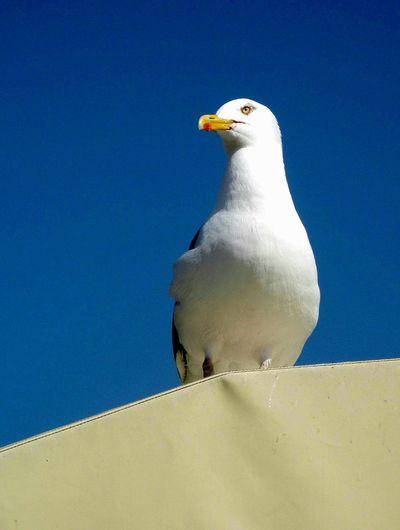 Möve Seagulls