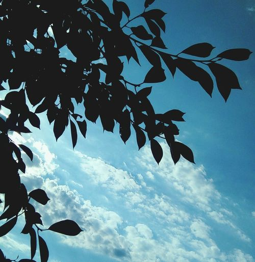 No People Sky Cloud - Sky Day Beauty In Nature Nature Tree Beautiful ♥ Silhouette Low Angle View Outdoors Bird Close-up