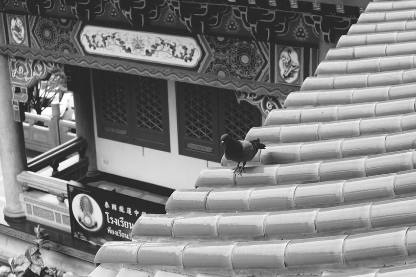 Architecture Built Structure Roof Animal Themes One Animal Bird Roof Structure Rooftop Roof Tile Lengneiyi วัดเล่งเน่ยยี่2 Thailand_allshots Architecture Pegion Pattern Noiretblanc Black & White Black & White Photography Blackandwhite Black And White Collection  Noir&blanc