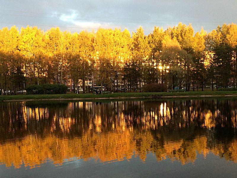 Осенька в Петербурге осень петербург Санкт-Петербург золото березки красота природа и красота