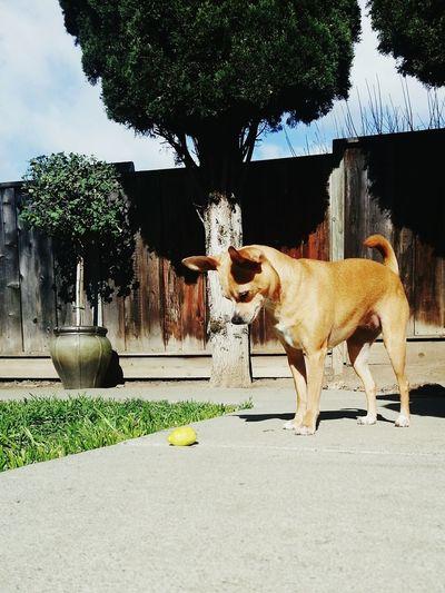 Dog Curious ? Lemon Kloe Fookloe Doglover