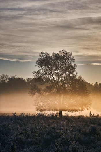 Foggy tree in sunrise Tree Plant Sky Cloud - Sky Beauty In Nature Tranquility Tranquil Scene Scenics - Nature Field Land Landscape Environment No People Nature Sunset Growth Silhouette Fog Outdoors Isolated Hazy  Sunrise