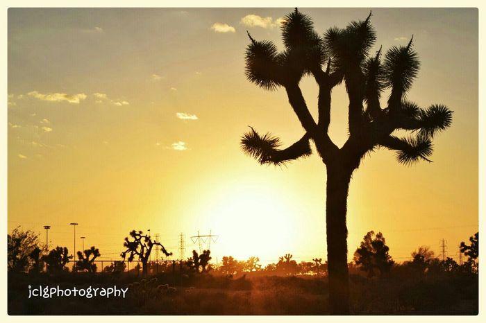 Sunset #sun #clouds #skylovers #sky #nature #beautifulinnature #naturalbeauty #photography #landscape Sunset_collection God is good