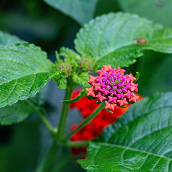 Canon EOS 60D Flowering Plant Flower Plant Growth Fragility Beauty In Nature Vulnerability  Close-up