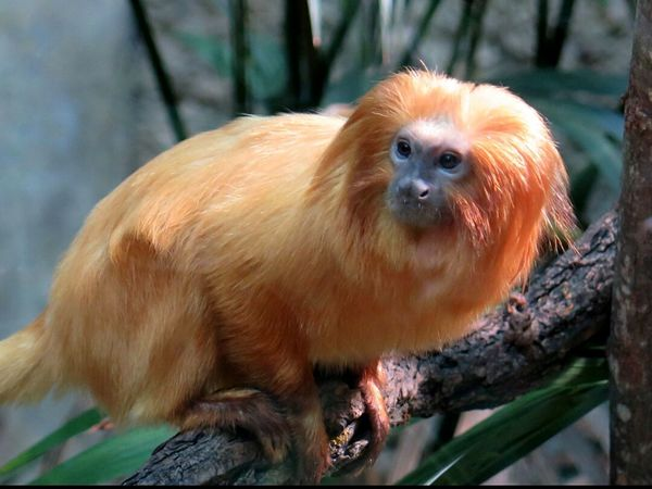 Animals Monky Zoo Animals  Beautiful Animals  Red Hair