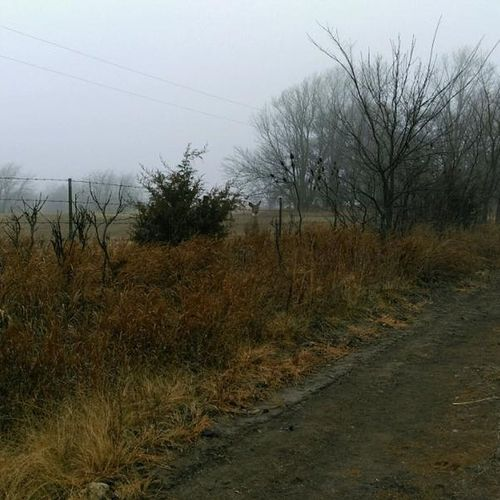 Hunting Doe Foggy Morning oh hi there