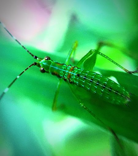 Check This Out Relaxing Taking Photos Enjoying Life Color Of Life Iphone6plus Focus On Foreground Green Color Grasshopper Bent Legs Jump High Color Pallete