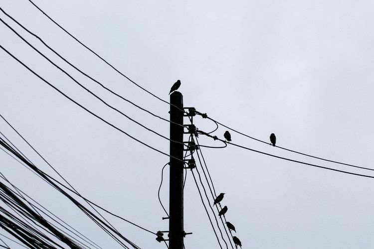 Cable Electricity  Low Angle View Connection Power Line  Sky Power Supply Bird Animals In The Wild Technology Animal Wildlife Fuel And Power Generation Animal Themes Perching Animal No People Electricity Pylon Nature Group Of Animals Outdoors Complexity Telephone Line Flock Of Birds Birds On Wire Birds On Cable