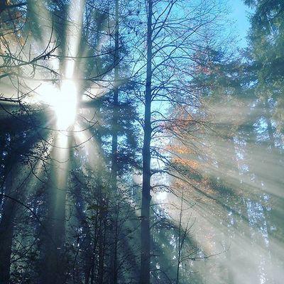 Wandern Nebel Bäume Wald Tree Herbst Albis Sunny Sonne Wandern Speckwegpfad Zürich Planetenpfad Swissalps üetliberg Herbst Nebel Fog Tree Laub Fettwegpfad Sonnenspiel Fog Herbst Sunny neblig wald planetenpfad albis swissalps swizerland