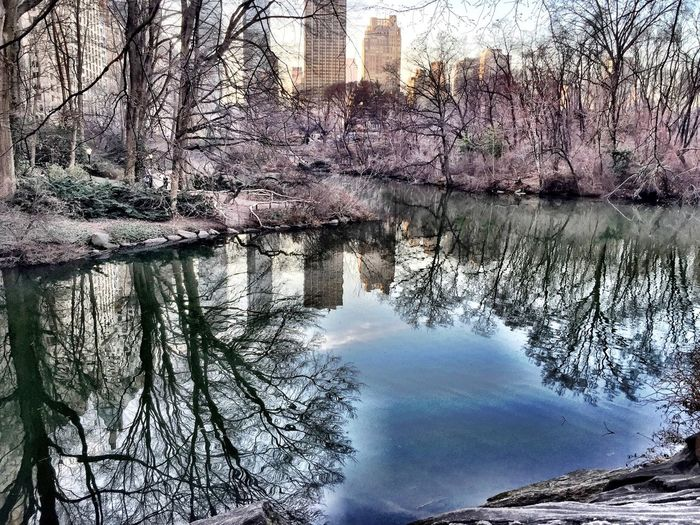 lake Water Trees #citypark New York Central Park Beautiful everyday