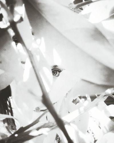 Leaf Nature Backgrounds Plant Close-up Freshness Outdoors Eyes Eye EyeEm Nature Lover EyeEm Eyes Watching You Eyeselfie Eyes Everywhere Womaneye Eyesbrown LoveNature Naturephotography Bw_collection BW_photography Bw_portraits Bwoftheday Blackandwhite Blackandwhite Photography Black & White