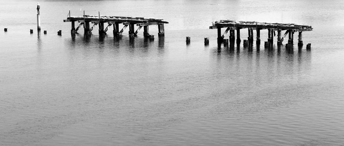 B&w Photography Black & White Black And White Black And White Photography Edinburgh Harbour Harbourside In A Row Pier Mooring Post Mooring Posts Harbour View Water Waterfront Wooden Pier Wooden Post Wooden Posts EyeEm Best Shots - Black + White EyeEm Best Shots EyeEm Gallery EyeEmBestPics EyeEm Best Shots - Landscape EyeEm Moorings  Mooring