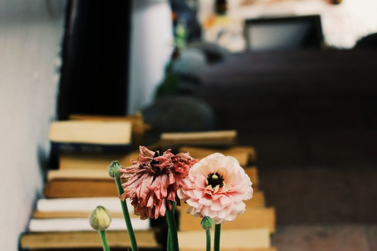 Pink flowers in front of the books