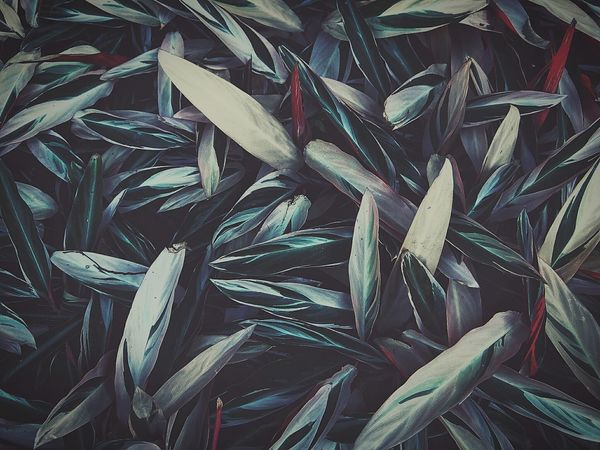 Bamboo Grass Bamboo Leaf Leaves Flowers,Plants & Garden Nature Nature Photography EyeEm Nature Lover Darkness And Light Light And Shadow Dark Photography Dark Edit My Style Full Frame Eye4photography  Nature's Diversities Fine Art Photography Showcase: February Colors And Patterns ゆf