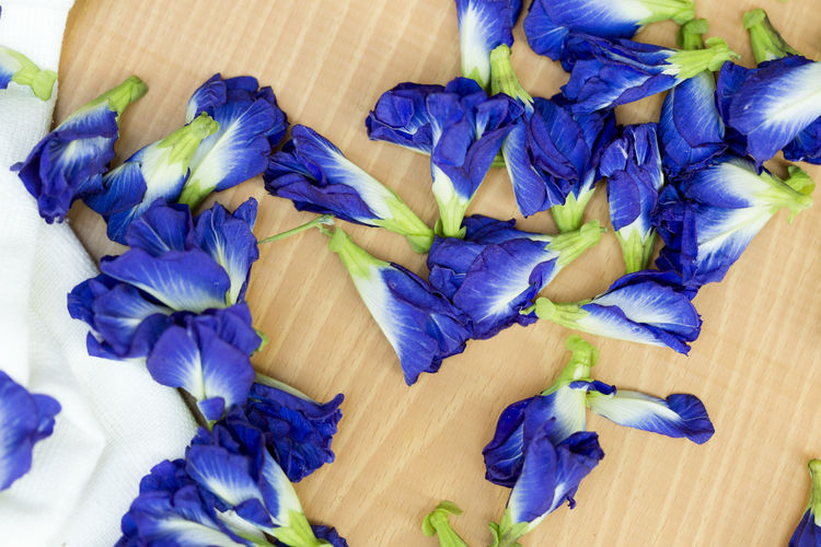 High angle view of purple blue flowers