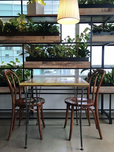 Seat Table Chair Business Plant Indoors  No People Potted Plant Restaurant Absence Built Structure Cafe Food And Drink Day Bar Counter Furniture Arrangement Architecture Wood - Material Empty