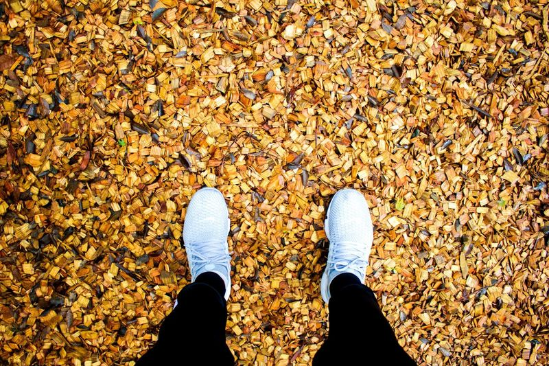 Change Leaf Shoe Low Section Personal Perspective One Person Human Leg Standing Human Body Part Real People Directly Above Day Outdoors Men Lifestyles Nature Adult People One Man Only EyeEm Best Shots OpenEdit Nature