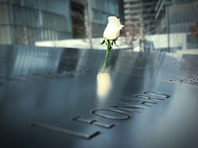 Fragility Close-up No People Day Flower 9/11 Memorial Outdoors Flower Tranquility Rose - Flower