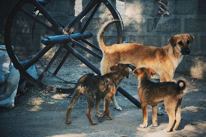 M o t h e r h o o d [1] 🐕 Jodhpur Rajasthan India Igersnavimumbai Phodus_competition Itz_mumbai _soimumbai _soi Soiwalks Mumbai_uncensored Ig_india Indianphotography Indianphotographyclub Desi_dairies Storiesofindia Canon EOS700D Pixelpanda_india Photographers_crews Canon_photos Pw_mumbai Pw_featured Somumbai Myhallaphoto Inspirioindia iiframe @instagram igersjodhpur