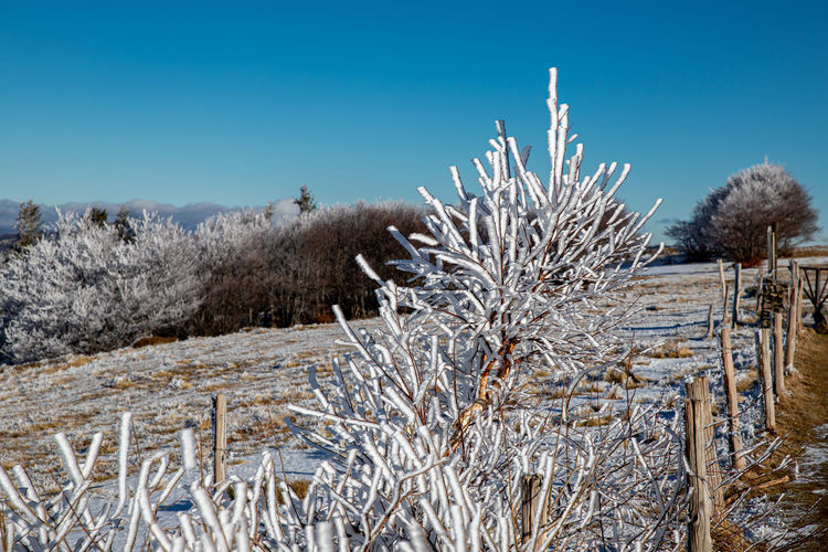 Plants growing on snow covered field against sky