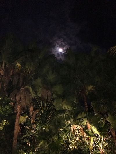 Night Moon Beauty In Nature Palm Tree Star - Space Outdoors