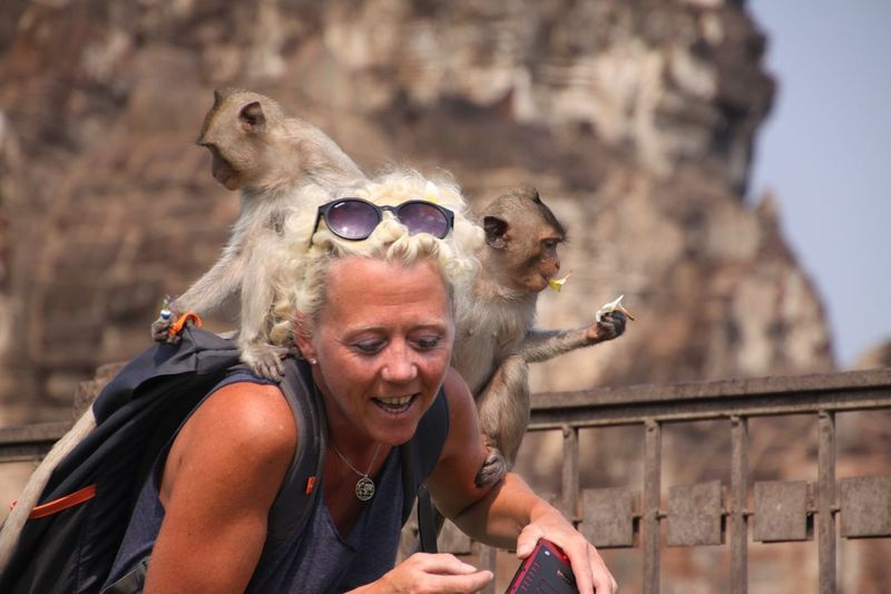Tourist woman attacked by two Monkeys and sitting on her backpack in Lopburi, Thailand Monkey Eating Real People City Hair Sitting Portrait Tourist Sunglasses Day Panic Thailand Woman Headshot Backpack Attack Blond Hair Lopburi Attacked Apes Steal Lifestyles One Person Focus On Foreground Animal Wildlife