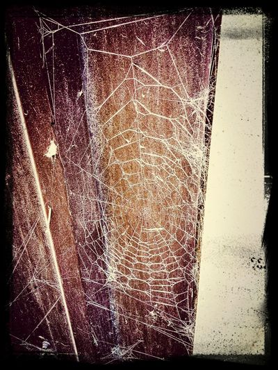 Spiderweb October Grunge Barnlife