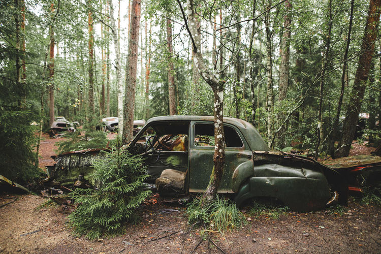 Abandoned car in forest