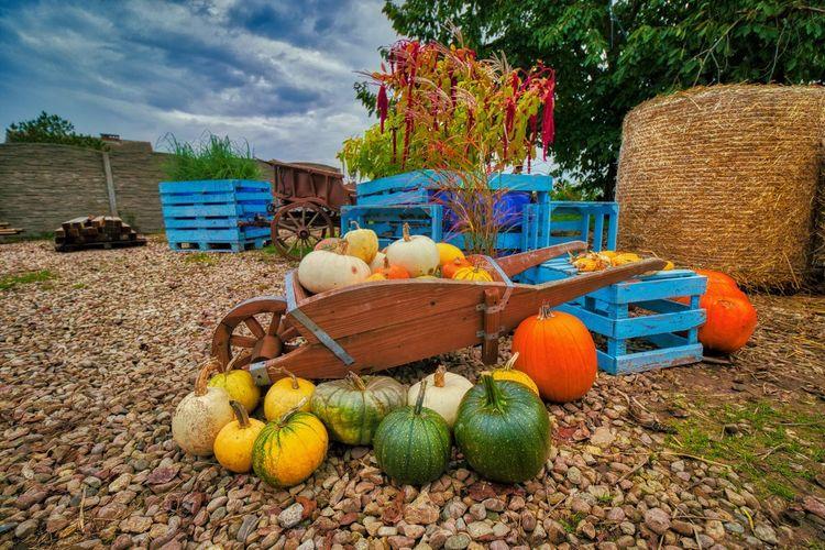 Various pumpkins in basket