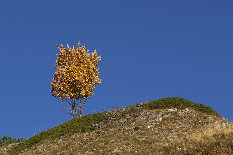 Gelber Baum Autumn Baum Beauty In Nature Blauer Himmel Blue Sky Gelb Gelbe Blätter Herbst Jellow Jellow Foliage Leuk Schweiz Switzerland Tranquility Tree Wallis