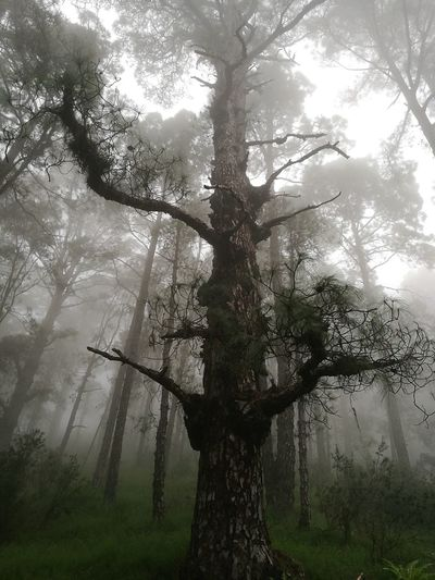 Las Raíces Tenerife Tree Nature Forest Beauty In Nature Tranquility No People Miles Away