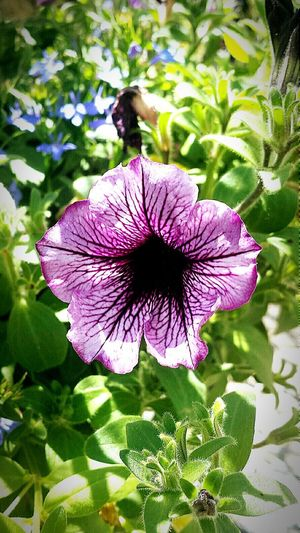 Flowers Purple Flower Purple Beautiful Naturehippies Nature Flower Veins