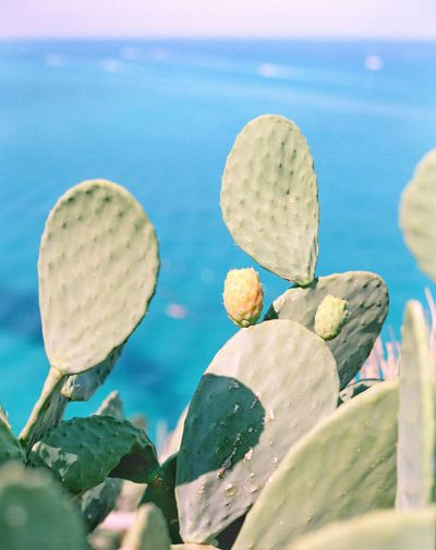 Tropea Calabria Italy Filmphotography Travel Destinations EyeEm Water No People Multi Colored Close-up Nature Art And Craft Day Sea Outdoors High Angle View Blue Sunlight Turquoise Colored Green Color