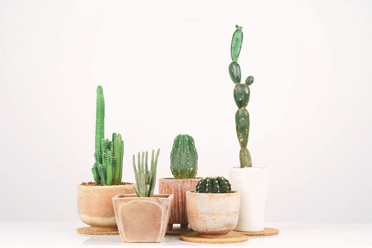 Cactus in clay pots over white background. Decor Green Room Background Beautiful Cactus Clay Clean Decoration Design DIY Flower Garden Grey Growth Happy Hipster Hobby Home Industrial Inside Inspiration Interior Lifestyle Loft Minimal Motivate  Motivation Must Natural Nature New Place Plant Pot Pure Rustic Scandinavian Shades Side Simple Small Space Stylish Succulent Table Text Trendy View White