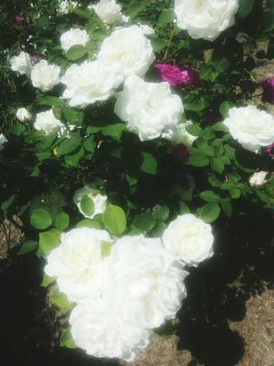 Purfume  Hi! Natural Beauty Enjoying Life Summer Eyem Gallery Hello World Flowers