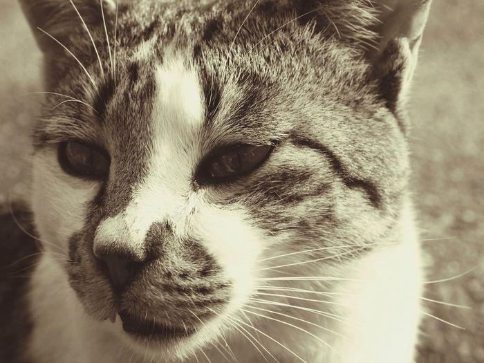 原点 猫 Cat First Eyeem Photo
