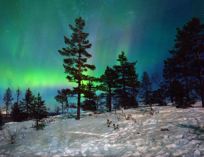 Trees on snow covered field against aurora borealis in sky