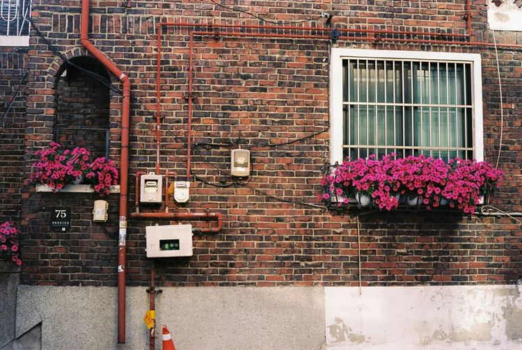 Flowers growing on brick wall